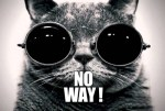 no-way-cat
