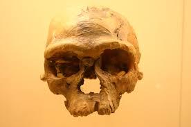 L'Homo Sapiens serait né au Maroc et non pas en Afrique du Sud ou de l'Est