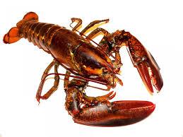 C'est désormais officiel, ébouillanter un homard vivant est interdit en Suisse