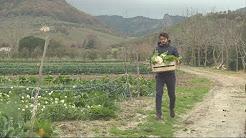 Agriculture : en Italie, les jeunes retournent à la terre