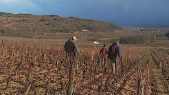 Un hiver dans un vignoble bourguignon