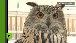 Russie : les oiseaux de proie au service du Kremlin