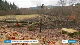 Corrèze : massacre à la tronçonneuse