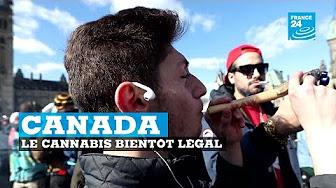 Canada : le cannabis légal dans 4 mois…
