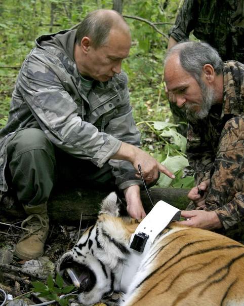 Poutine chasseur de tigre ? Encore une fake news au journal de France 2