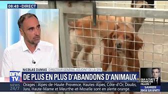"""Abandons d'animaux en forte hausse cet été : """"Tous nos refuges sont saturés"""" déplore le directeur général adjoint de la SPA"""
