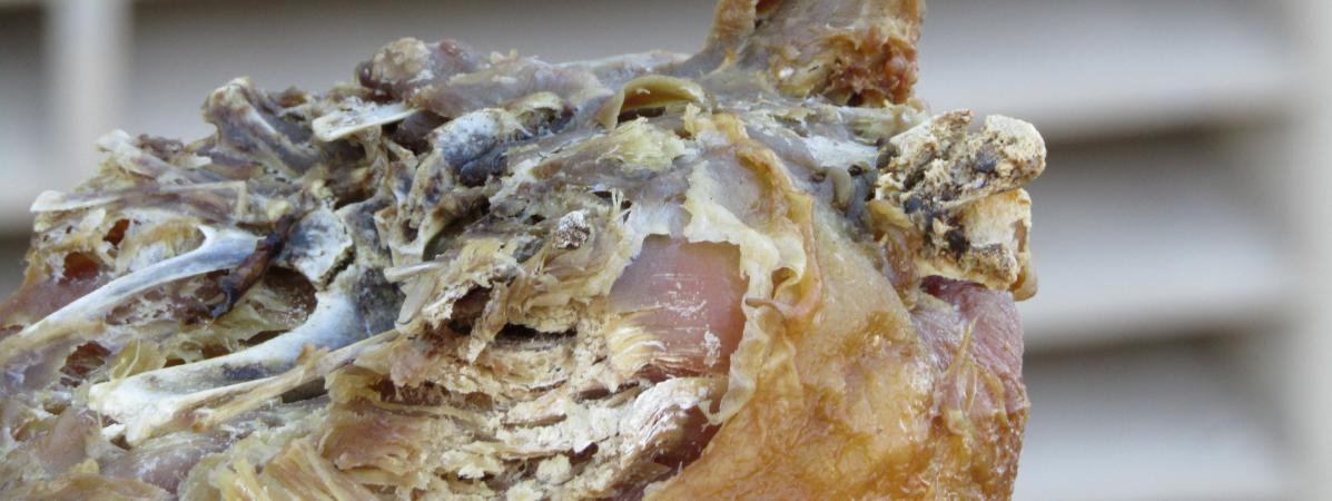 Scandale : 5 tonnes de viande avariée destinées aux kebabs franciliens saisies…