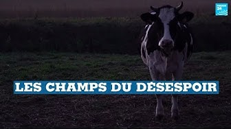 Suicide d'agriculteurs en France : Les champs du désespoir