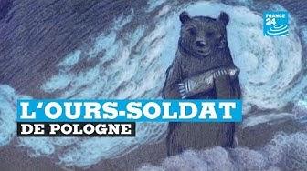 Pologne : l'incroyable histoire de l'ours soldat