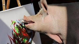 Après Picasso, Pigcasso (VIDÉO)