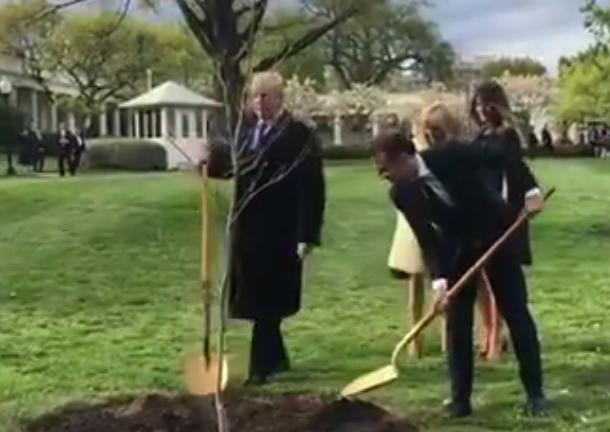 Tout un symbole : le petit chêne planté par Macron et Trump à la Maison-Blanche est mort