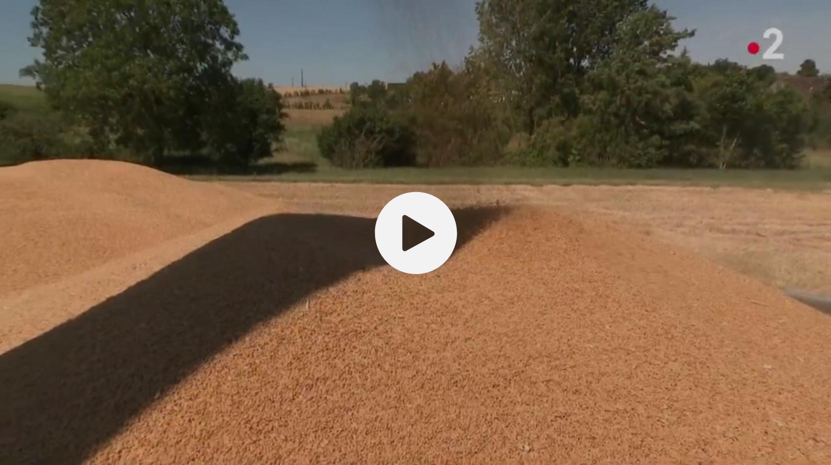 Agriculture : à cause des écolos et des charges, la France exporte de moins en moins sa production