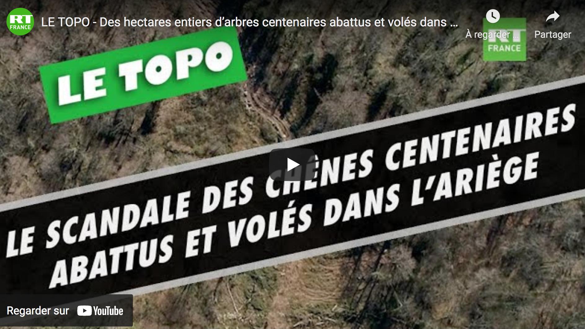 Des hectares entiers d'arbres centenaires abattus et volés dans l'Ariège (ENQUÊTE)